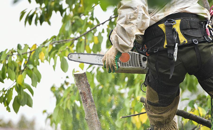 Aménagement paysager - Élagage et abattage d'arbres