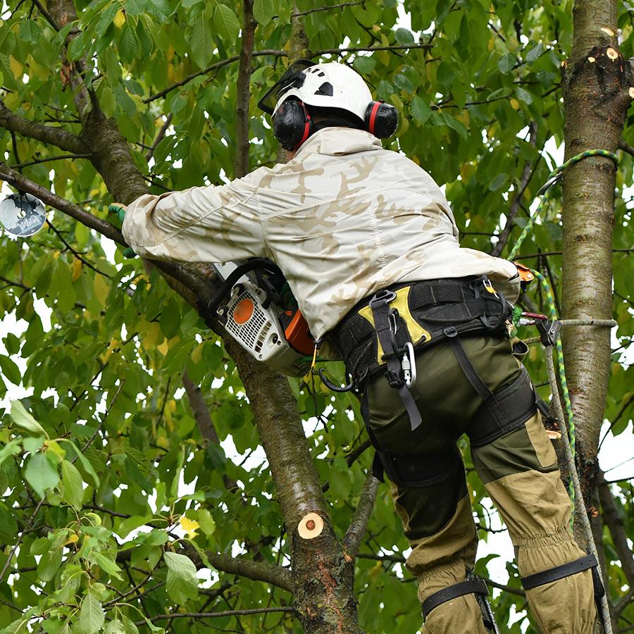 Élagage et abattage d'arbres à Paris, Arcachon et Laval