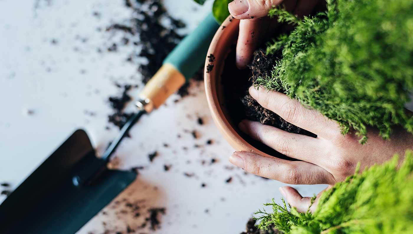 Paysagiste d'extérieur - Plantation de végétaux et fleurs en extérieur