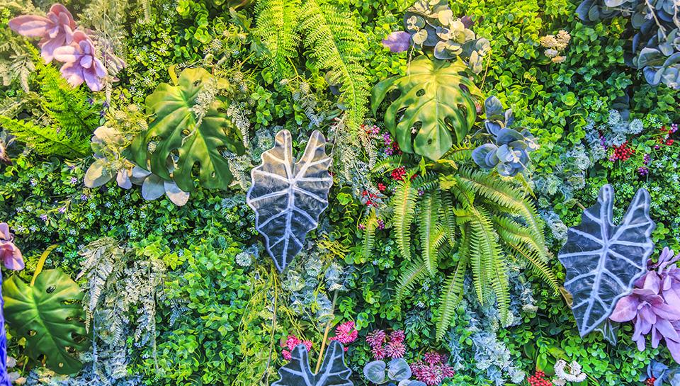 Réalisation et installation de murs végétaux