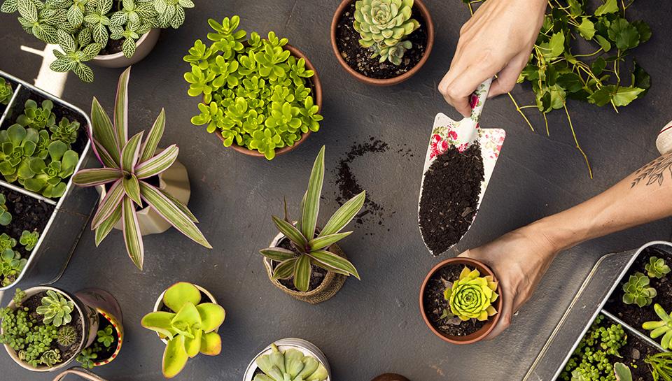 Plantation de végétaux en intérieur et vente