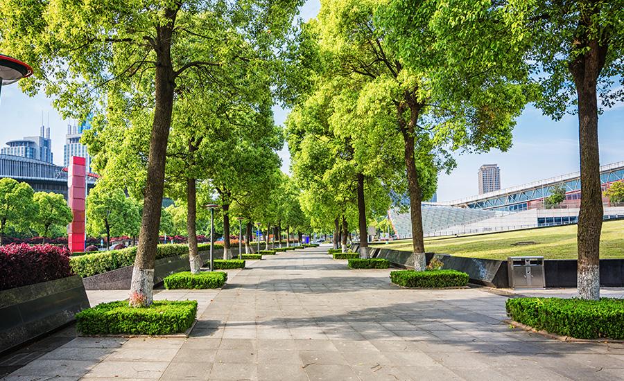 Végétalisation urbaine : pourquoi et comment végétaliser nos villes ?
