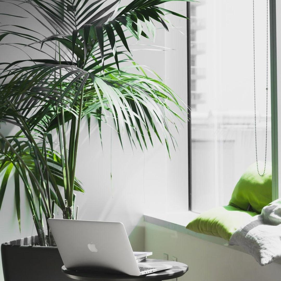 Paysagistes intérieur plantes